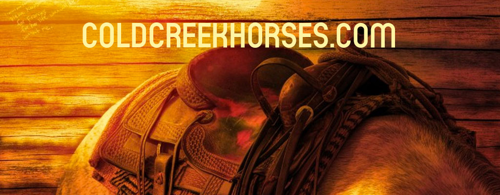 What brand of saddles do you find on the Equitack website ?