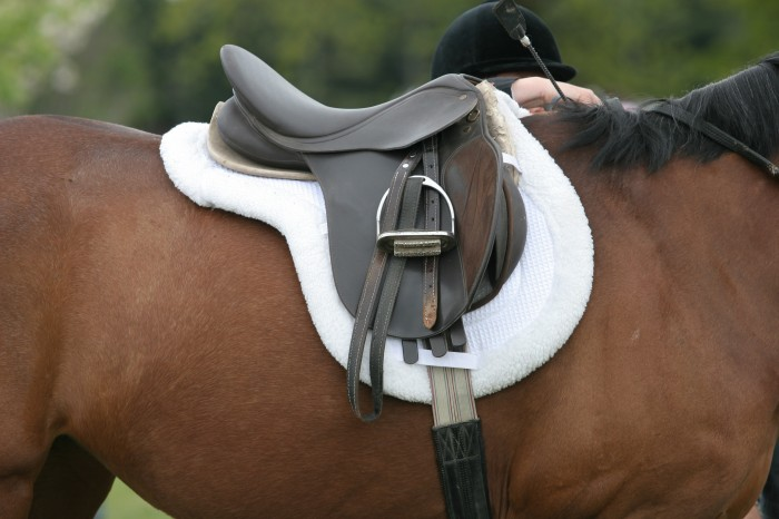 Which style of saddle should you buy for dressage?